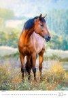 Kalendarz ścienny wieloplanszowy Horses Dreaming 2021 - październik 2021