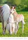 Kalendarz ścienny wieloplanszowy Horses Dreaming 2021 - maj 2021