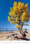 Kalendarz ścienny wieloplanszowy Trees 2021 - listopad 2021