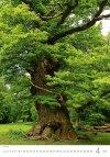 Kalendarz ścienny wieloplanszowy Trees 2021 - kwiecień 2021