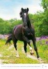 Kalendarz ścienny wieloplanszowy Horses Dreaming 2021 - lipiec 2021