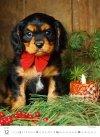 Kalendarz ścienny wieloplanszowy Puppies 2021 - grudzień 2021