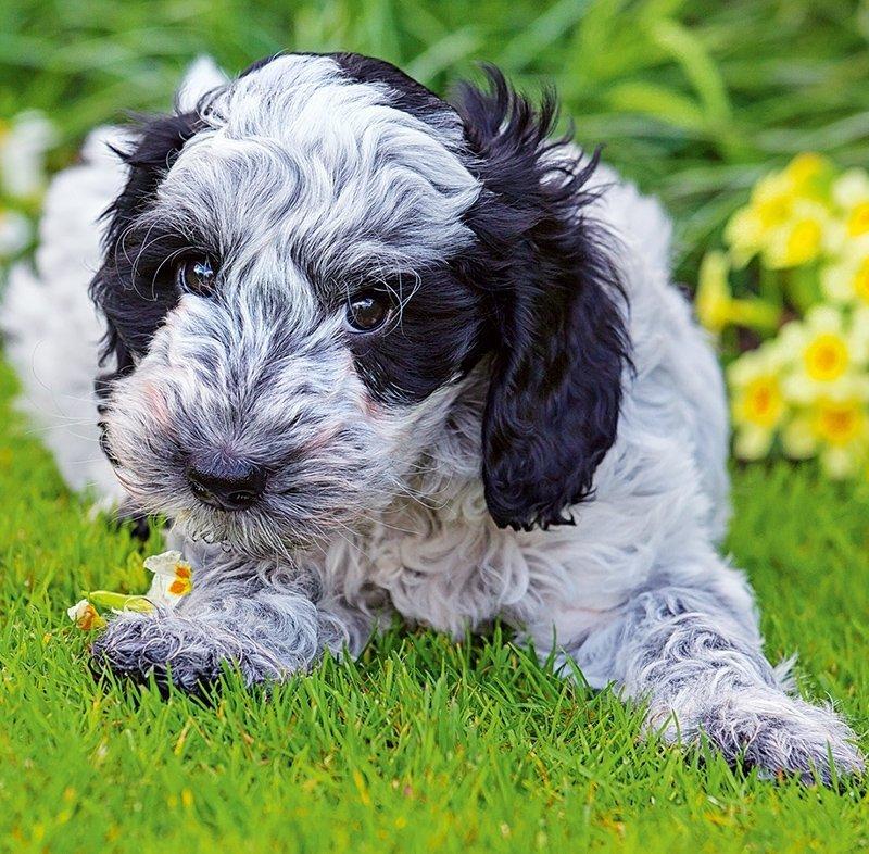 Kalendarz ścienny wieloplanszowy Dogs 2022 z naklejkami - kwiecień 2022