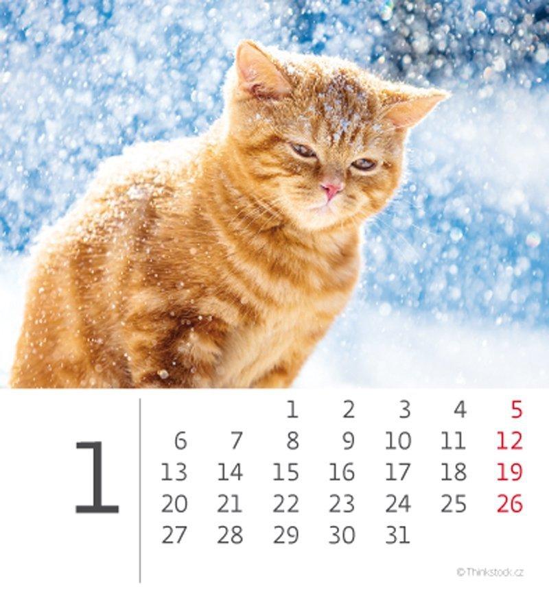 Kalendarz biurkowy 2020 mini Kotki - styczeń