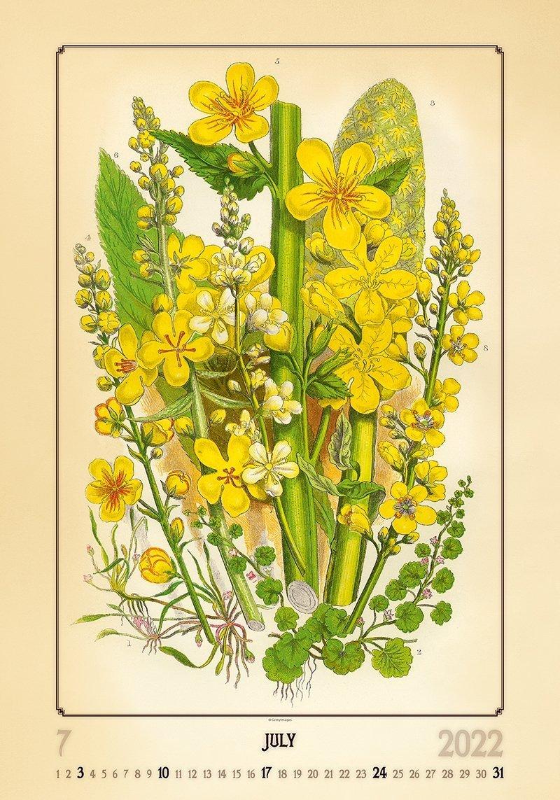 Kalendarz ścienny wieloplanszowy Herbarium 2022 - lipiec 2022