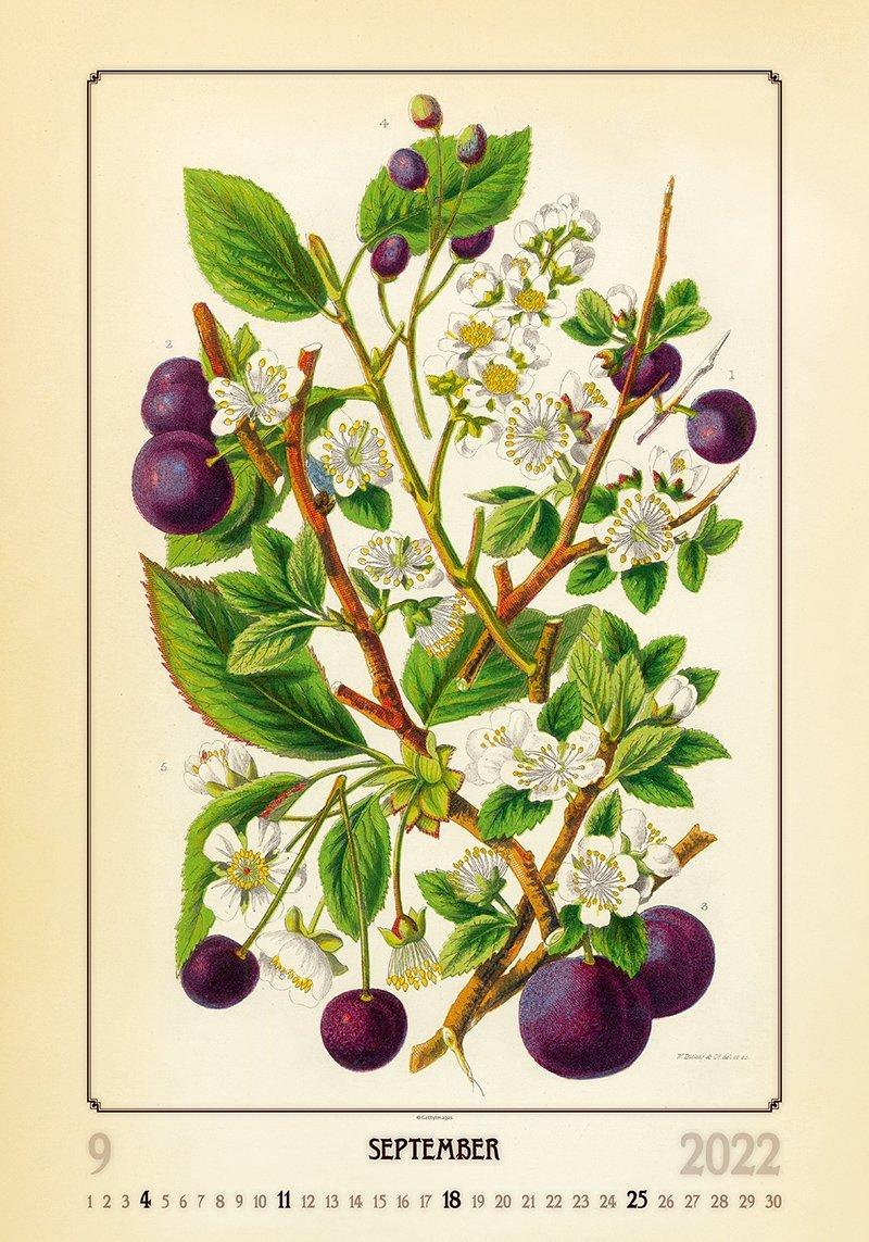 Kalendarz ścienny wieloplanszowy Herbarium 2022 - wrzesień 2022
