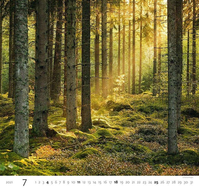 Kalendarz ścienny wieloplanszowy Forest 2021 - lipiec 2021