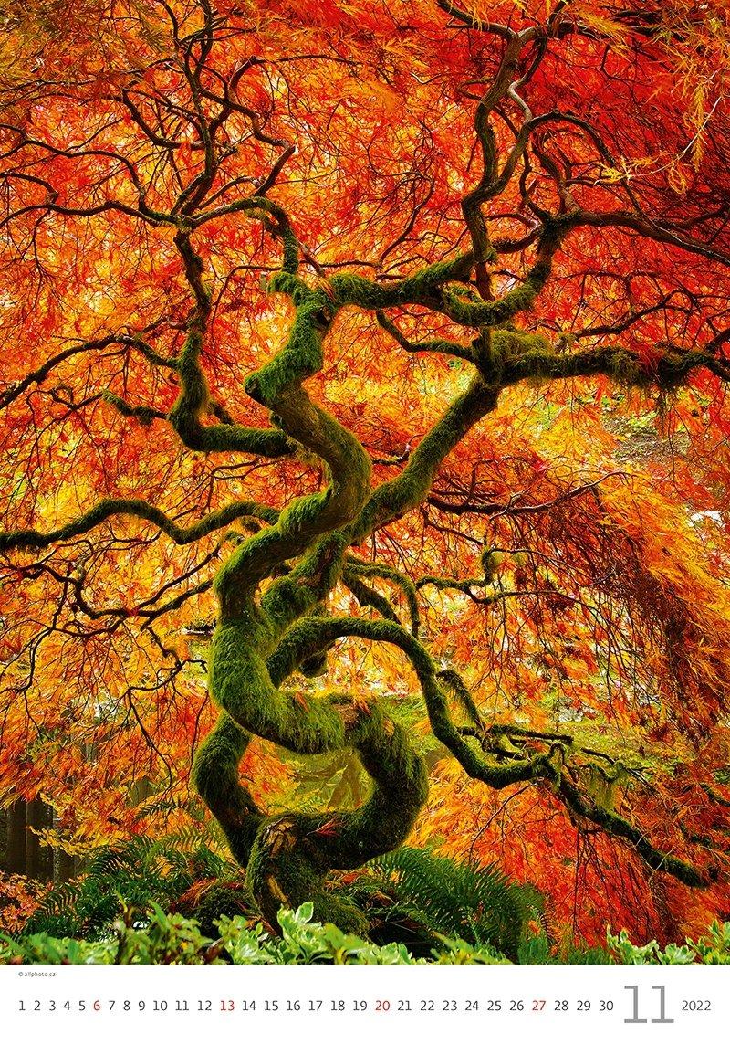 Kalendarz ścienny wieloplanszowy Trees 2022 - listopad 2022