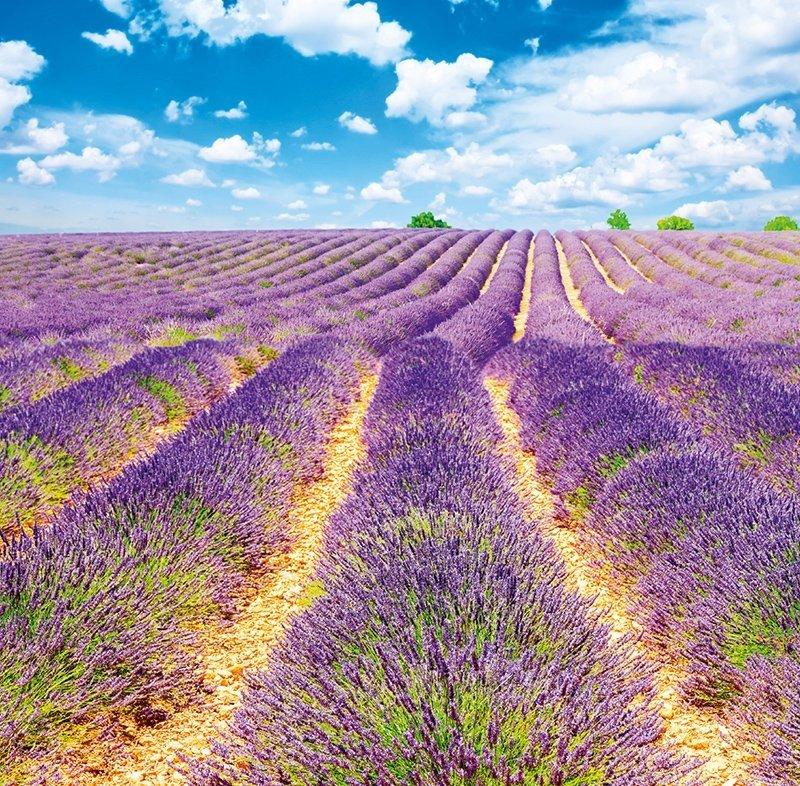Kalendarz ścienny wieloplanszowy Provence 2022 z naklejkami - kwiecień 2022