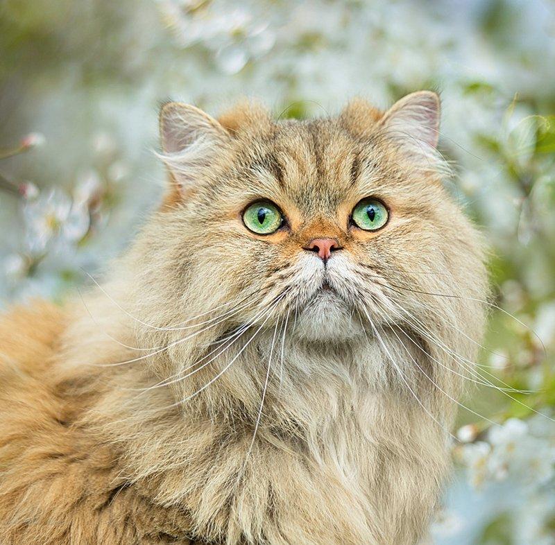 Kalendarz ścienny wieloplanszowy Cats 2021 z naklejkami - maj 2021