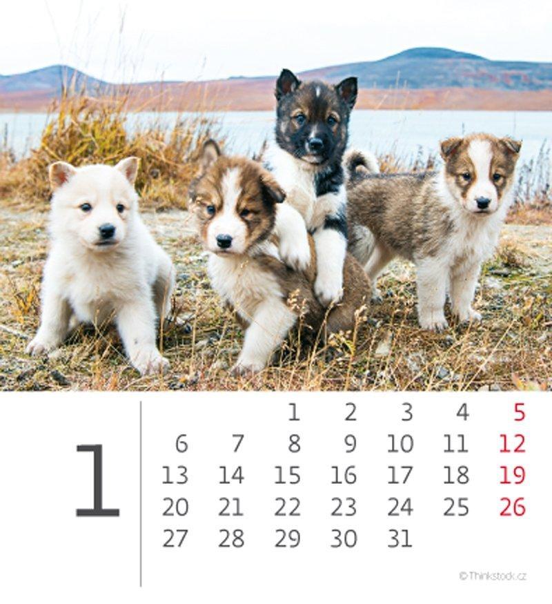 Kalendarz biurkowy mini Pieski 2020 - styczeń