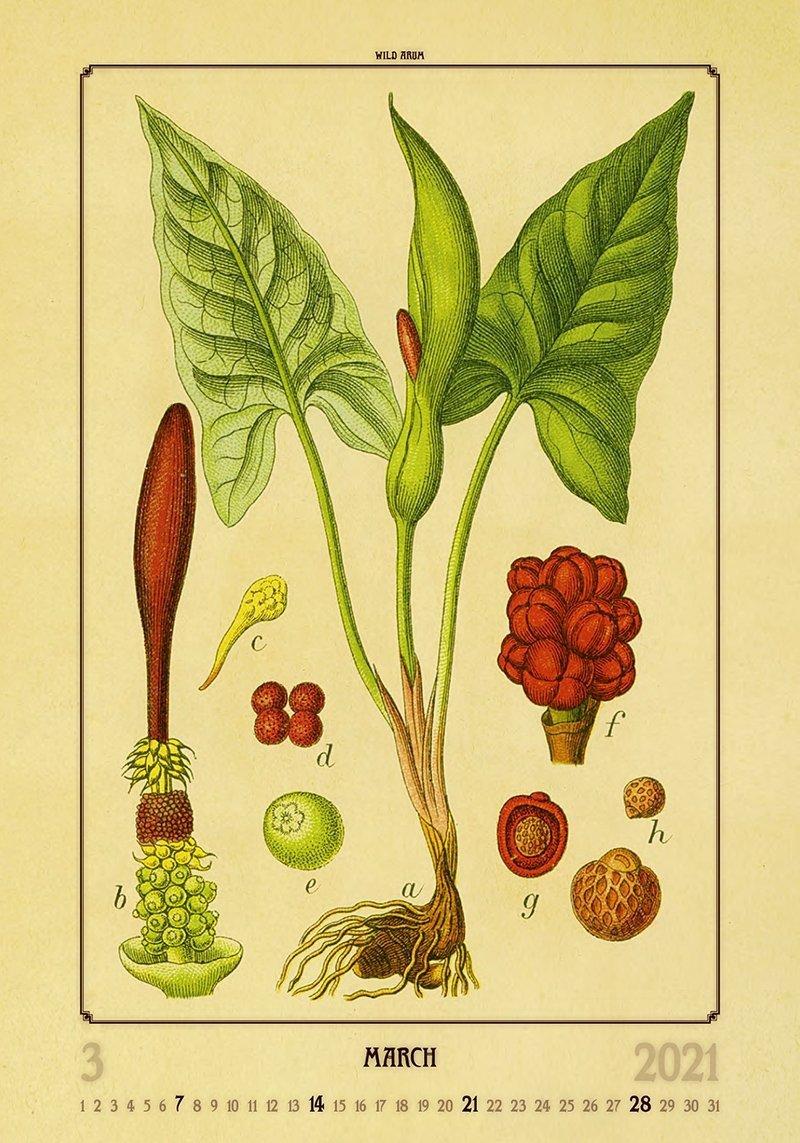 Kalendarz ścienny wieloplanszowy Herbarium 2021 - marzec 2021