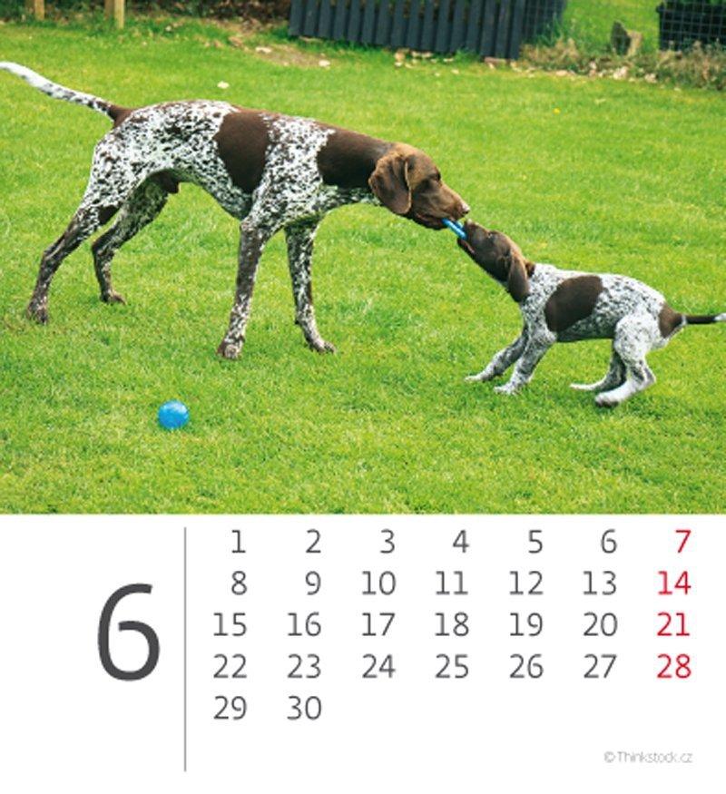 Kalendarz biurkowy mini Pieski 2020 - czerwiec