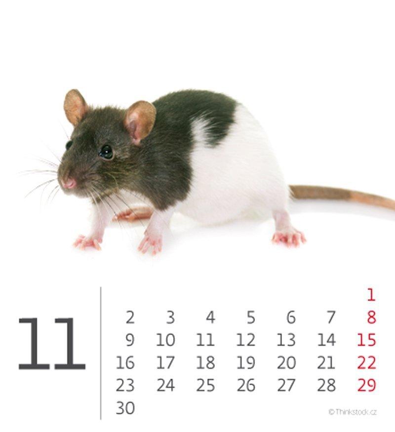 Kalendarz biurkowy mini Zwierzątka 2020 - listopad