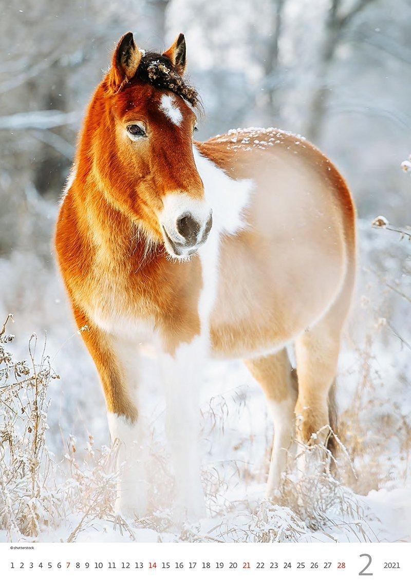 Kalendarz ścienny wieloplanszowy Horses Dreaming 2021 - luty 2021