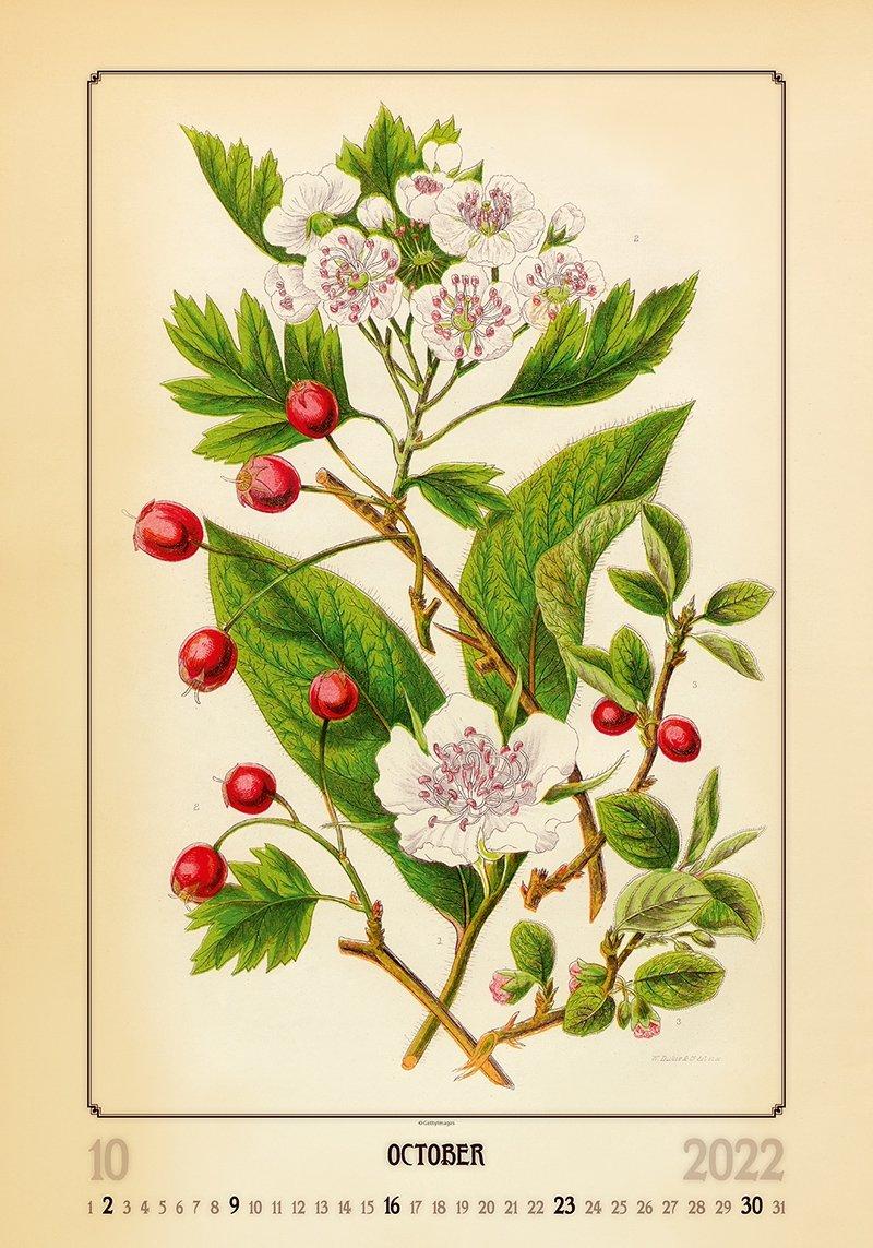 Kalendarz ścienny wieloplanszowy Herbarium 2022 - październik 2022