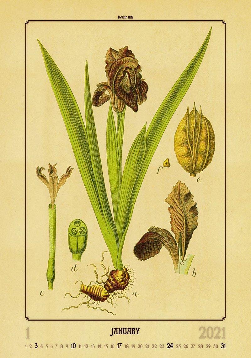 Kalendarz ścienny wieloplanszowy Herbarium 2021 - styczeń 2021