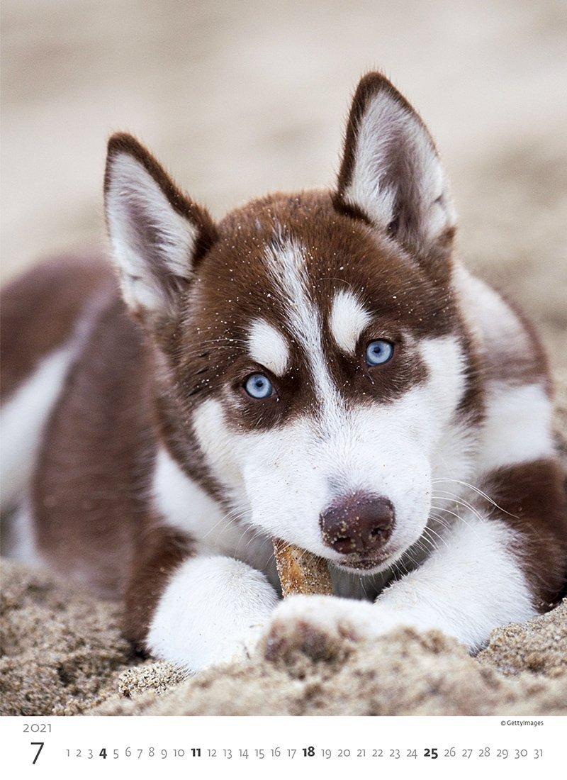 Kalendarz ścienny wieloplanszowy Puppies 2021 - lipiec 2021