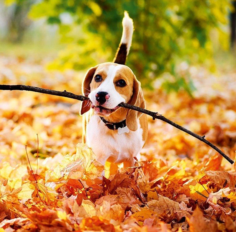 Kalendarz ścienny wieloplanszowy Dogs 2022 z naklejkami - październik 2022