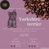 Kawa YORKSHIRE TERRIER CoffeeFolks 250g