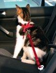Trixie 1294 Szelki Samochodowe dla kota