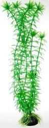 Hailea ANA40 Sztuczna roślina ANACHARIS 40 cm