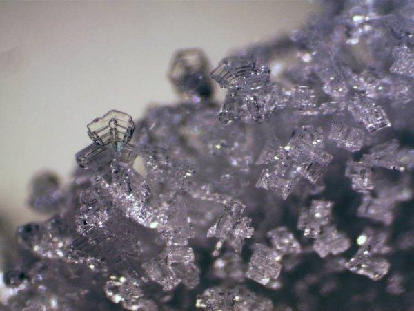 Mikroskop stereoskopowy Bresser Erudit ICD