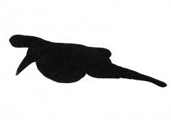 Wabik kruk ze skrzydłami, flokowany