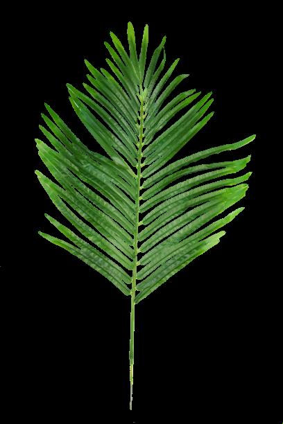 Liść palmy - B002702