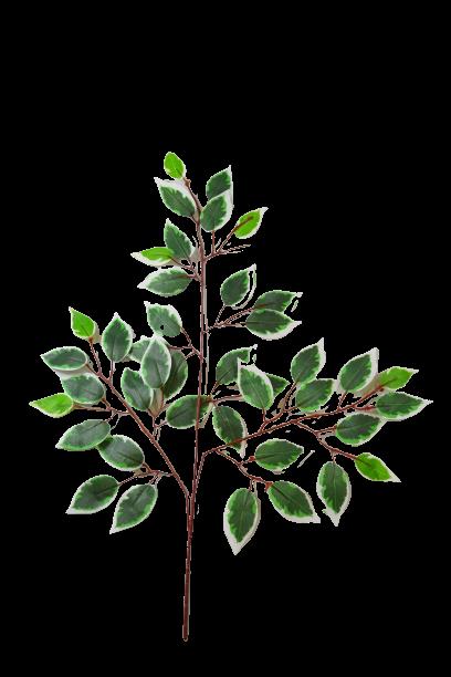 Gałązka benjamin  liść matowy - YSL0050A