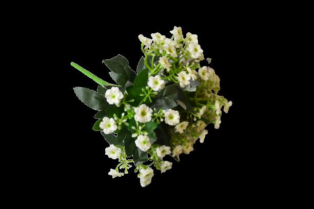 Bukiet Kalanchoe x 6 kwiatów MIX