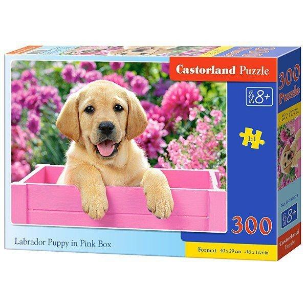 300 EL. Labrador w pudełku