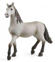 Hiszpański Młody Koń