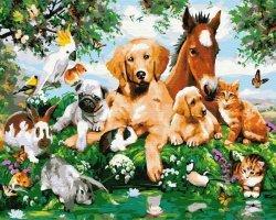 Malowanie po numerach - Zwierzęta