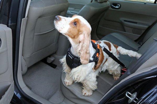 KARDIFF Pasy bezpieczeństwa dla psa, rozm. M CZARNY