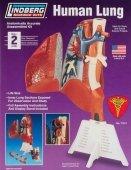Model plastikowy Lindberg - Ludzkie płuco