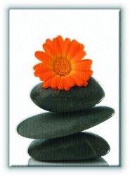 Spa - kamień i stokrotka - Obraz na płótnie