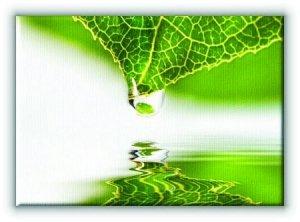 Kropla na Liściu - Obraz na płótnie