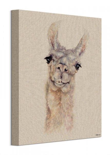 Lama - obraz na płótnie