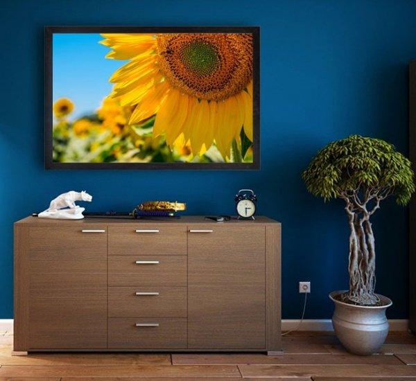 Francja, słoneczniki - plakat premium