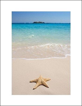 Rozgwiazda na plaży - plakat premium