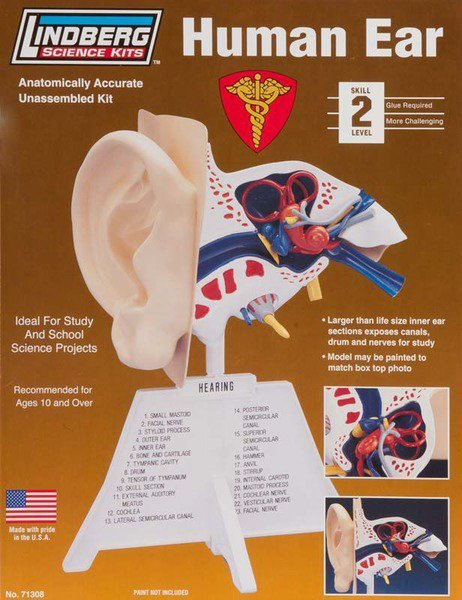 Model plastikowy Lindberg - Ludzkie ucho