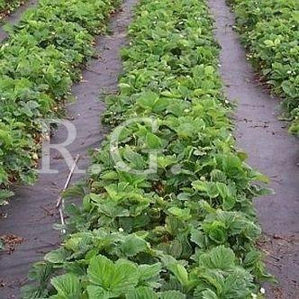 Gartenvlies Unkrautvlies 50g 1,6m 1 lfm