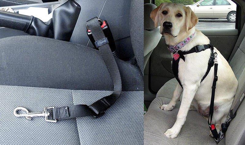 Smycz samochodowa dla psa