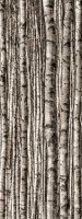 Tubądzin Dekor Szklany 4-elementowy Birch 239,8x89,8