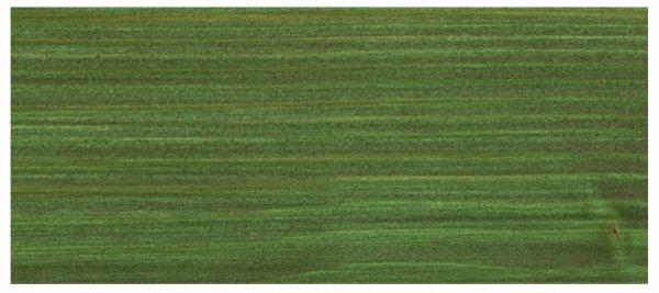 osmo-lazura-olejna-zielen-choinkowa-729-wzornik