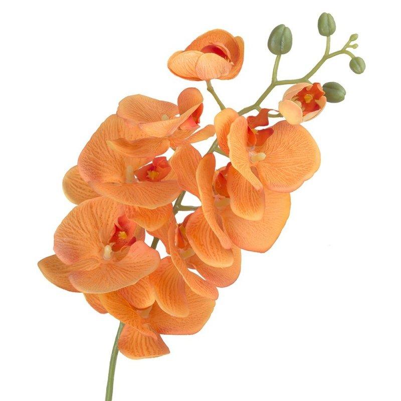 Gałązka Storczyka Pomarańcz