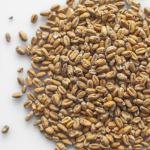 Słód piwowarski pszeniczny 1 kg