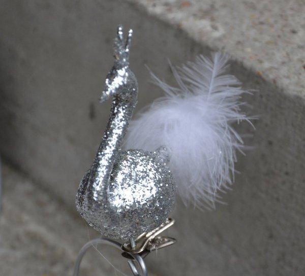 Łabędz srebrny