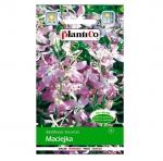 MACIEJKA różowa nasiona kwiatów 5g